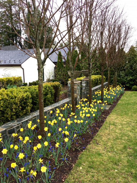 PHOTO-Border with spring bulbs