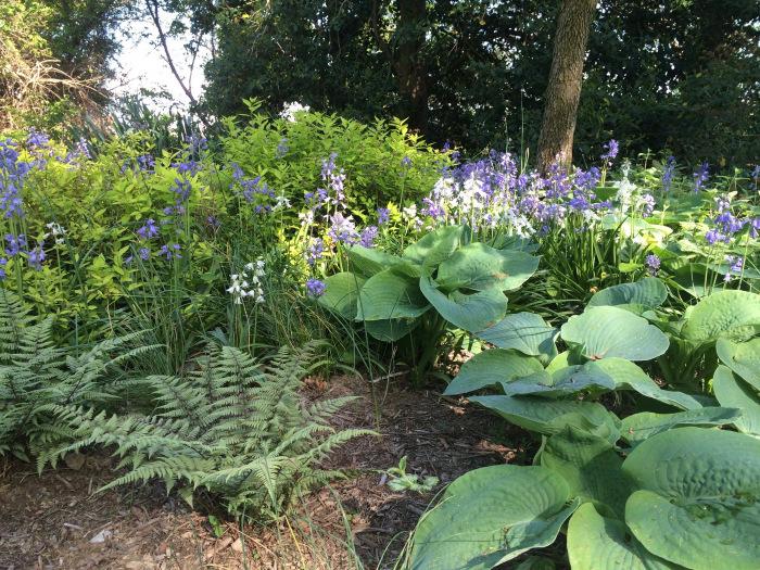 PHOTO-Spring woodland garden